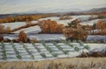 Oliviers dans la neige 1